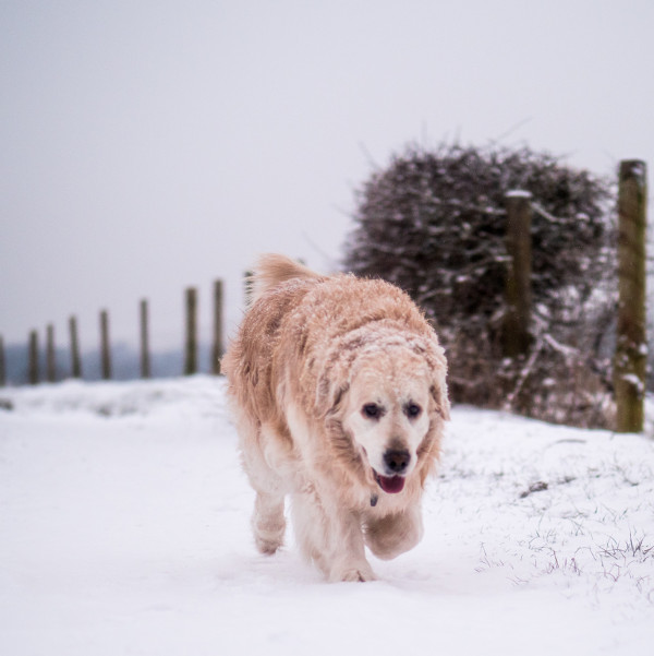 all_weather_dog_walking